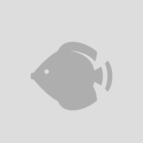 Libra Vessel 2.5T